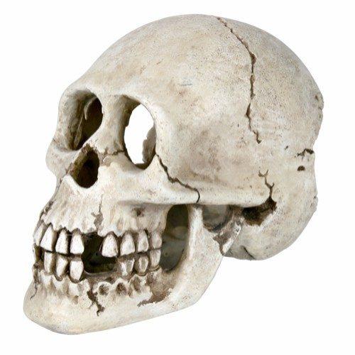 Dekor kranie 15cm