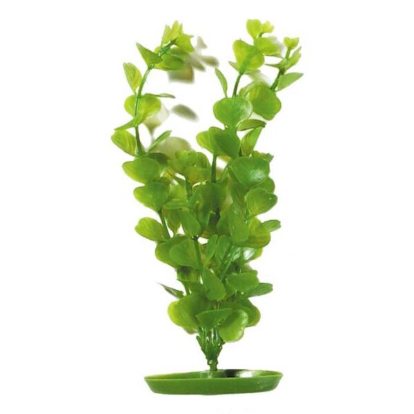 PLASTPLANTE MONEYWORT